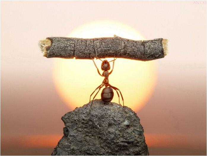 IL la hormiguita que salvó al hormiguero